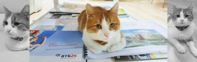 cat_news_1100x350